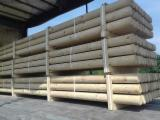 Poutres Rondes à vendre - Grumes pin sylvestre