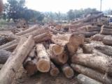 Tropenrundholz Zu Verkaufen - Konisches Rundholz, Teak, Ghana