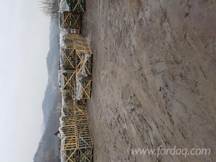 Beech--Firewood-Woodlogs-Cleaved-3-5