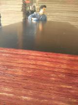 覆膜胶合板(棕膜), 贝壳杉