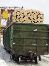 Tvrdo Drvo  Trupci - Za Rezanje, Breza