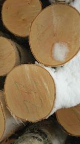 Hardwood  Logs For Sale - Saw Logs, Birch