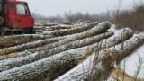 Wälder und Rundholz - Furnierholz, Messerfurnierstämme, Esche