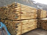 Hardwood  Logs - 4/16 mm Chestnut  Cylindrical Trimmed Round Wood from Italy, Calabria