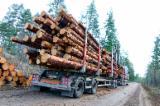 Schnittholzstämme, Fichte/Kiefer