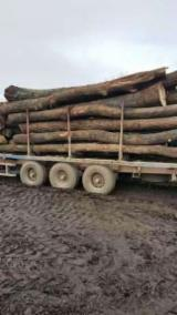 Hardwood  Logs For Sale Romania - 28+ cm Saw Logs from Romania, Dolj