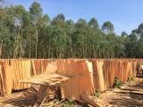 Tranchage Vietnam - Vend Placage Naturel Eucalyptus