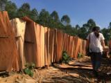 Tranciati - Vendo Tranciato In Legno Naturale Acacia
