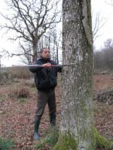 Kupiti Ili Prodati  Šumarstvo Za Drvo Usluge - Šumarstvo, Francuska