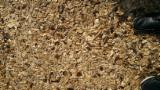 All coniferous Wood Chips From Forest