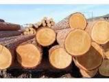Tropical Wood  Logs - A/B (first) 80 cm Okoumé  Peeling Logs