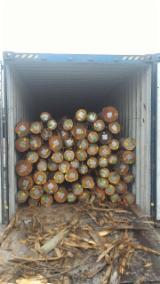 Peeling Logs - Eucalyptus peeling logs for sale, 14/29 cm