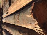 Wälder Und Rundholz Zu Verkaufen - Schnittholzstämme, Eukalyptus