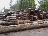 Oak veneer for sale