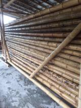 Softwood  Glulam - Finger Jointed Studs For Sale - Colombia