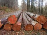 Nadelrundholz Zu Verkaufen Deutschland - Blochware-haltiges-Lärchen Stammholz zu verkaufen