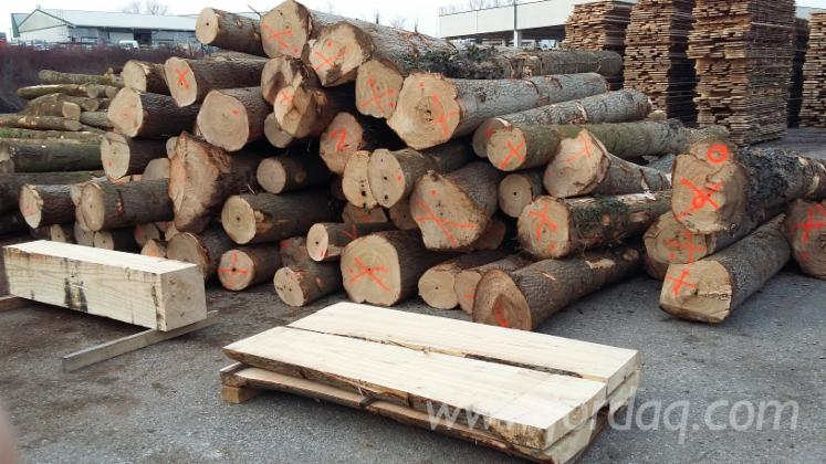 Sell--Paulownia-Logs--%28made-in-Europe