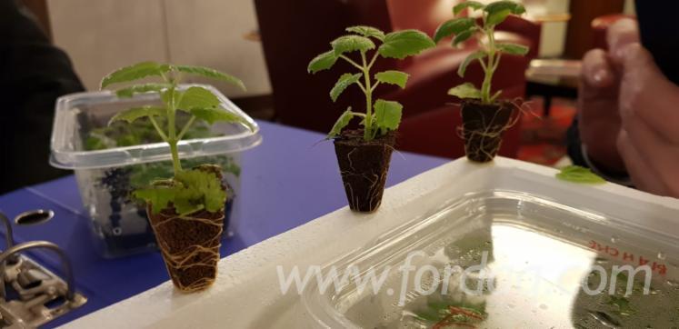 Plantation-EUROPA