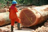 Congotali Hardwood Logs - Tropical Round/Square Logs/Veneer/Lumber