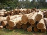 Colombia Suministros - teca madera