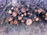 Firewood, Pellets And Residues - Cherry Firewood/Woodlogs Not Cleaved