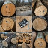 Hardwood  Logs For Sale Romania -  Beech Saw Logs
