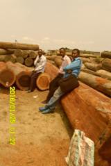 Dem. Rep. Congo (Zaire) - Fordaq Online market - Wenge Saw Logs, diameter 70-100 cm