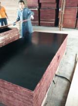 Vand Placaj Filmat (film Negru) Plop 18 mm China