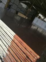 Waterproof Eucalyptus Film Faced Plywood, 21 x 1250 x 2500 mm