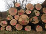 Standing Timber - Ash wood Logs