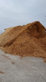 null - Beech  Wood Chips From Forest