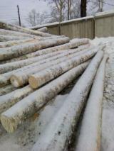 Germany Hardwood Logs - Birch Saw Logs