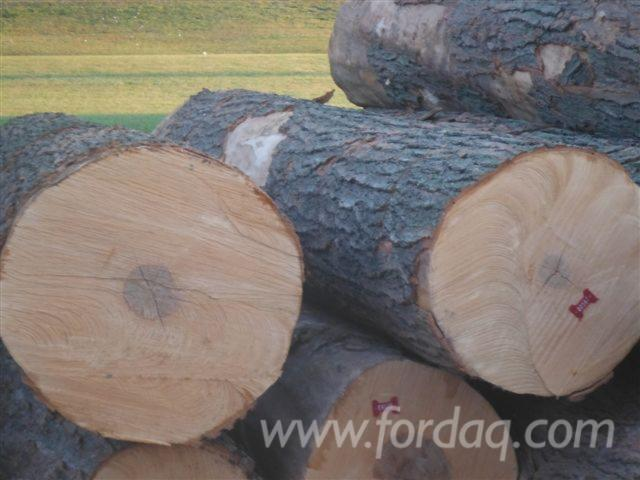 Furnierholz--Messerfurnierst%C3%A4mme--Hard-Maple