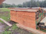 Laubschnittholz, Besäumtes Holz, Hobelware  Zu Verkaufen - Kanthölzer, Eukalyptus