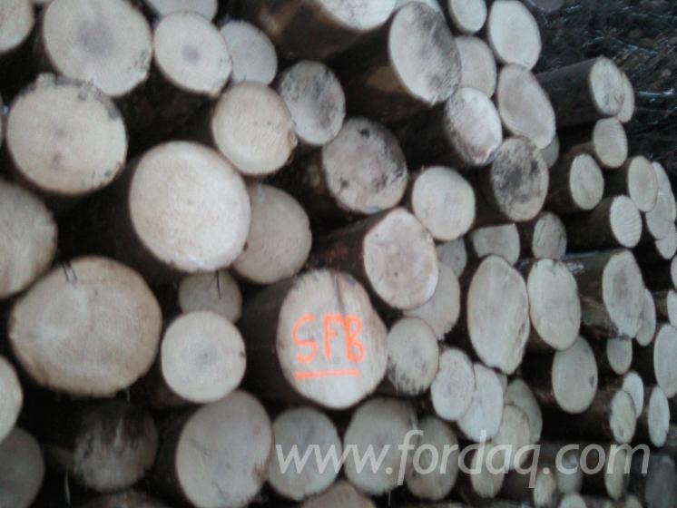 Fir-Saw-Logs