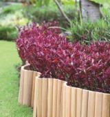 平滑(重黄)娑罗双木, 花园饰边