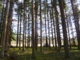 France Softwood Logs - Lebanon cedar 40 à 60 cm sciage Saw Logs France
