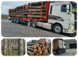 Hardwood  Logs For Sale Romania - Paulownia Logs for sale