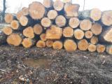 PEFC/FFC Certified Hardwood Logs - Birch Saw Logs, 200+ mm, PEFC/FFC