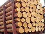 Nadelrundholz Ukraine - Schnittholzstämme, Kiefer  - Rotholz