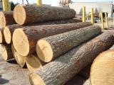 Schnittholzstämme Weichholz  Zu Verkaufen - Schnittholzstämme