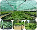 Forest Services - Paulownia planting services