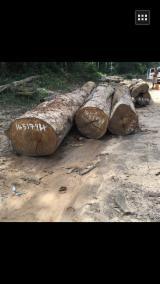 Hardwood  Logs For Sale - Cumaru Logs