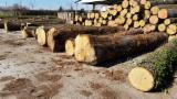 null - Oak logs