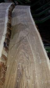 Holzagenturen - Jetzt Registrieren - Handelsvermittlung, Pakistan