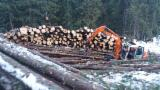 Forest Services - Skidding - Forwarding from Romania