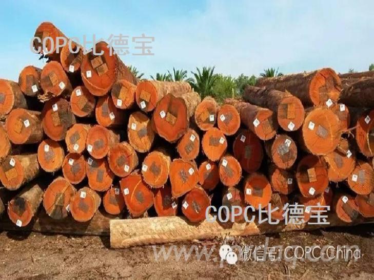 Eucalyptus Grandis Logs From Uruguay