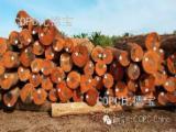 Eucalyptus Hardwood Logs - Uruguay Eucalyptus Grandis Logs, diameter 30+ cm