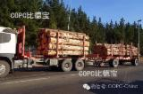 FSC Certified Softwood Logs - PINE FROM CHILE