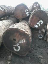 Wälder und Rundholz - Stämme Für Die Industrie, Faserholz, Tali